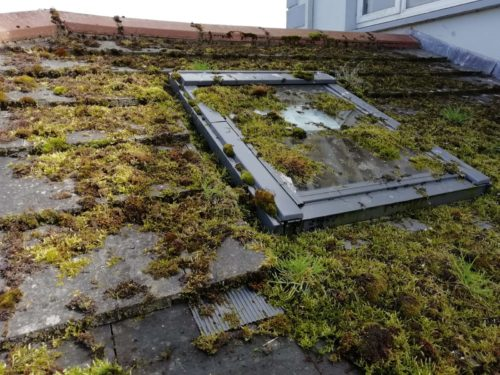 A roof and skylight covered in moss and dirt before cleaning by Room with a View Window Cleaning Meath